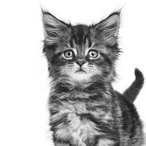 Скидка 50% на корма для котят и щенков Royal Canin