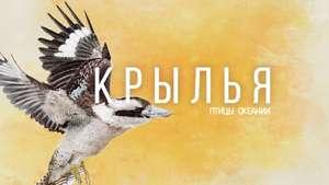 """Настольная игра """"Крылья: птицы Океании"""""""
