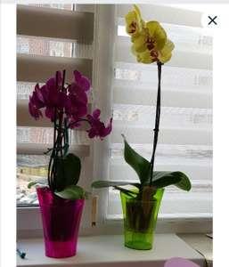 """Ваза для орхидей Optimplast треугольная 1,3 л. (по 77р, если взять """"комплект"""" из 2-х)"""