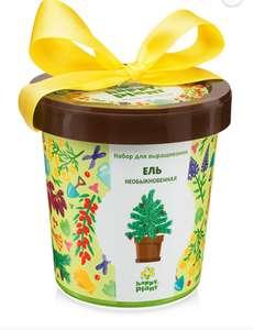 Подарочный набор для выращивания в горшке Ель необыкновенная Happy Plants