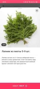 [СПб] Лапник из пихты 5-9 шт.