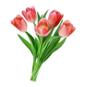 [Не везде] Букет из 5 тюльпанов