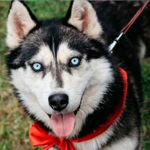 [24.08] Бесплатный вход на Фестиваль домашних животных,нужно зарегиться на petshopdays.ru