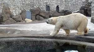 Гости в белом смогут бесплатно посетить Московский зоопарк 27 февраля