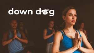 Бесплатная подписка на Down Dog для студентов и преподавателей